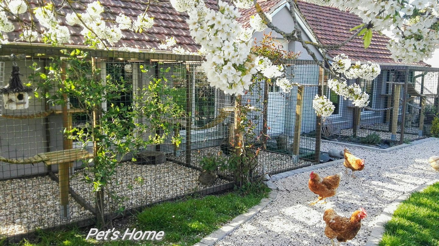 Les poules de Pet's Home